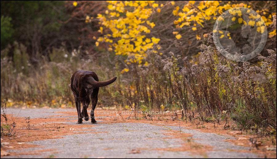 19-waterloo-ontario-best-professional-dog-photographer-max shoup-398