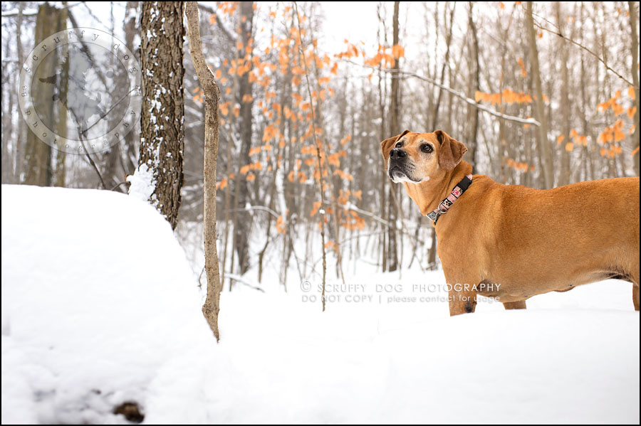 19-waterloo-ontario-professional--dog-photographer-best-makeda slinger-302
