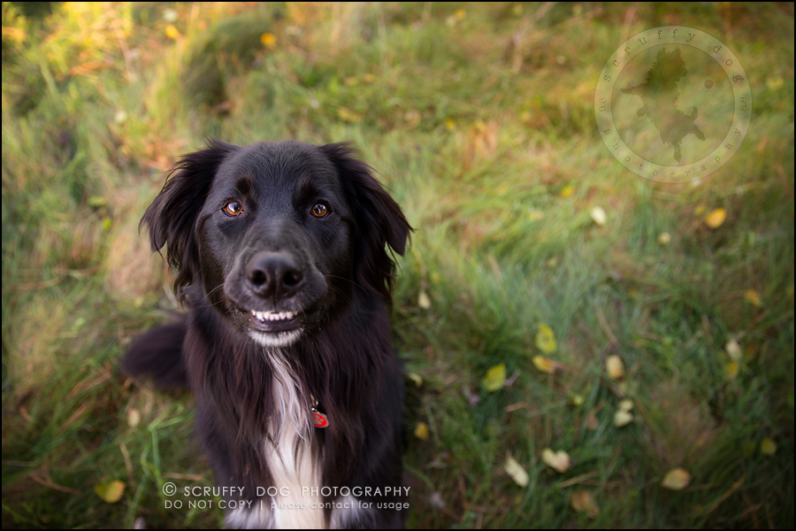 19-waterloo-ontario-professional-dog-photographer-hudson manning-572