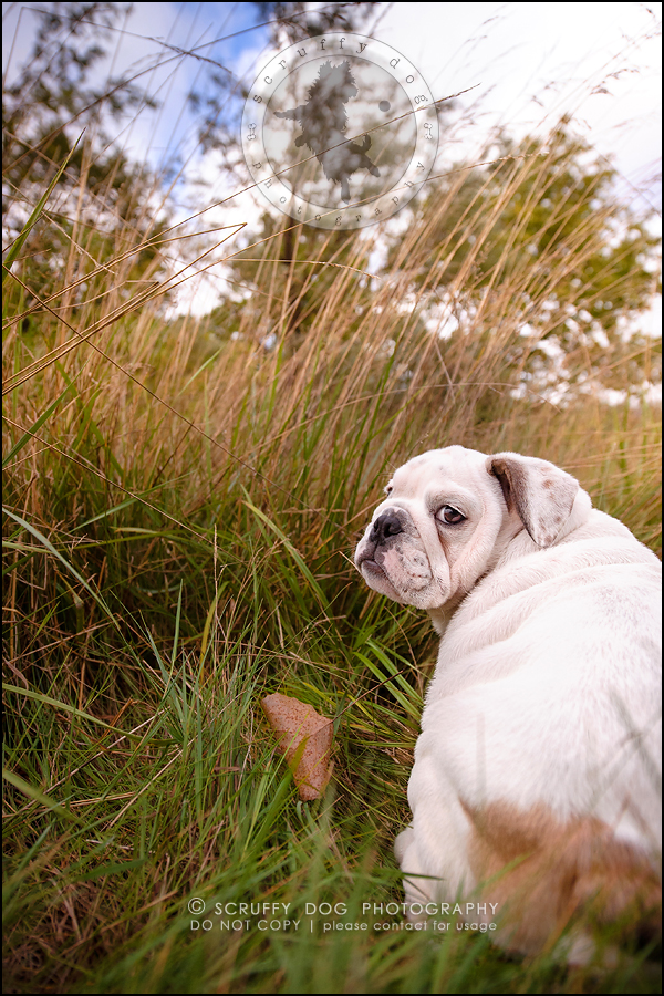 19_guelph_ontario_pet_photographer_best_dog_oliver eleanor fleming-445
