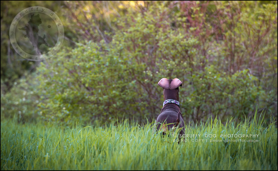 19_guelph_ontario_pet_photographer_best_dog_reese hunsberger-128