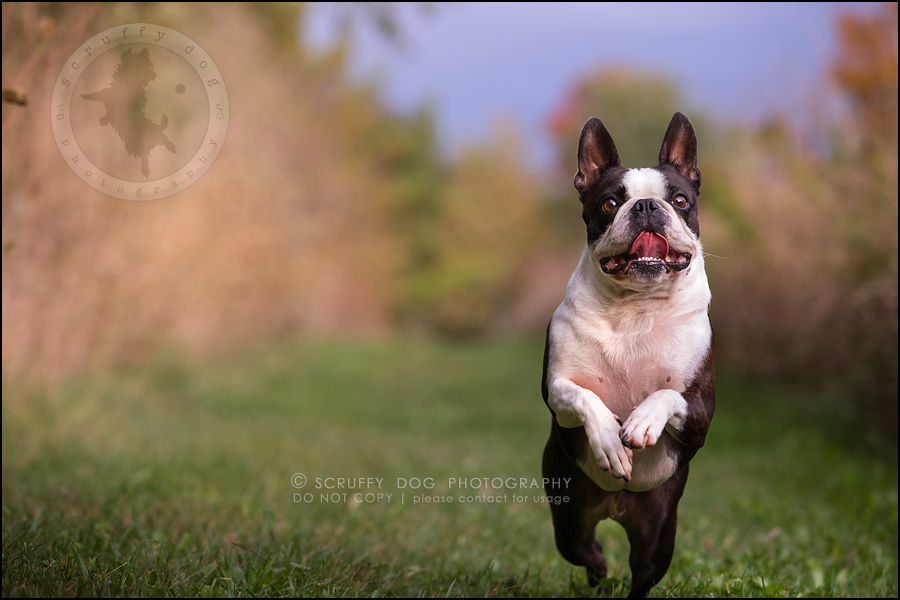 19_kitchener_ontario_pet_photographer_best_dog_princess dot carroll-222
