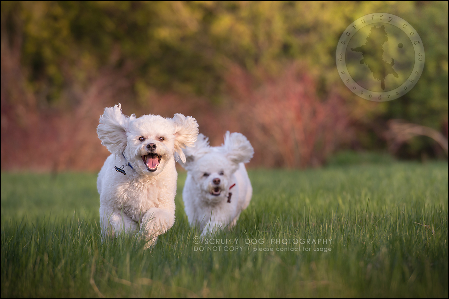 19_ontario_dog_stock_photography_dwss-647