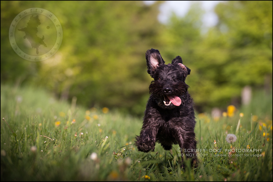 19toronto_ontario_dog_stock_photography_geordi jessie ladrillo-445