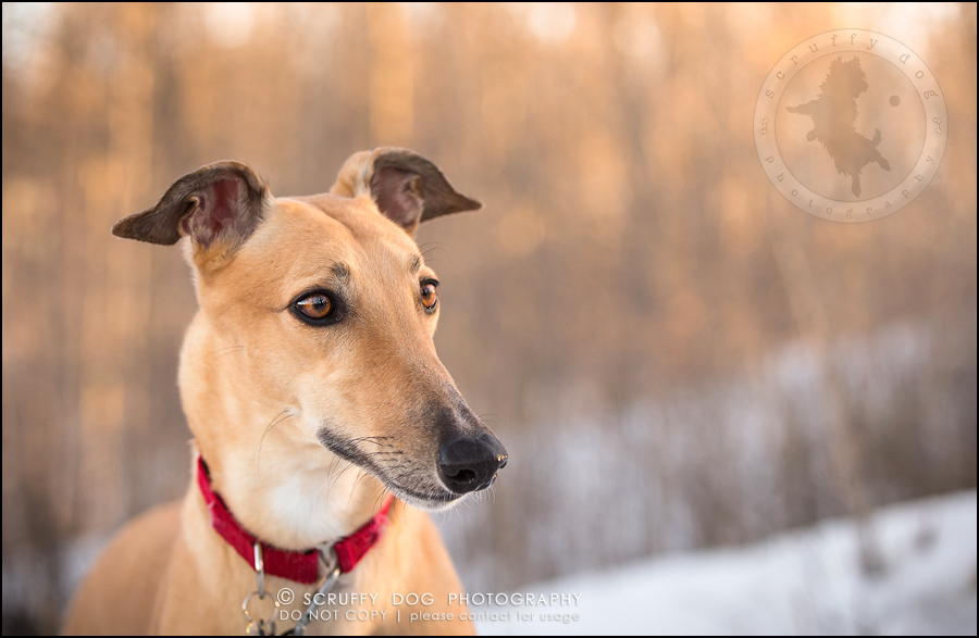 20-toronto-ontario-professional--dog-photographer-lucy poppy real-781