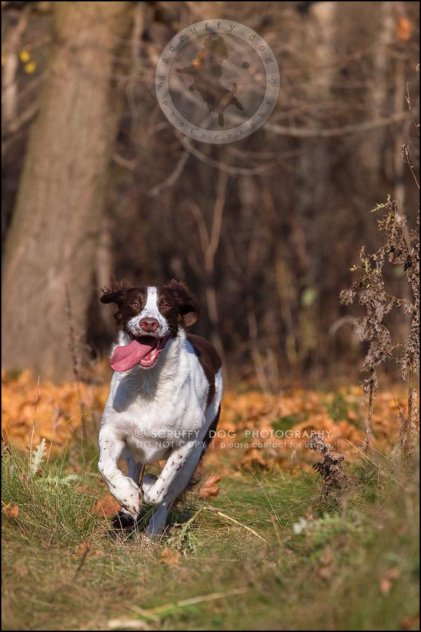 20-toronto-ontario-professional-pet-dog-photographer-jake boucher-200