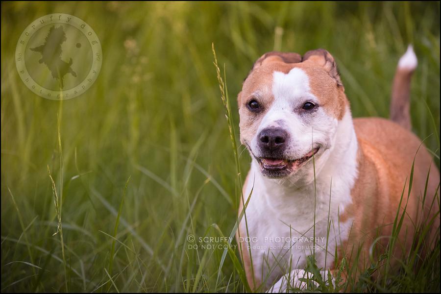 20-toronto-ontario-professional-pet-photographer-jade perry-365