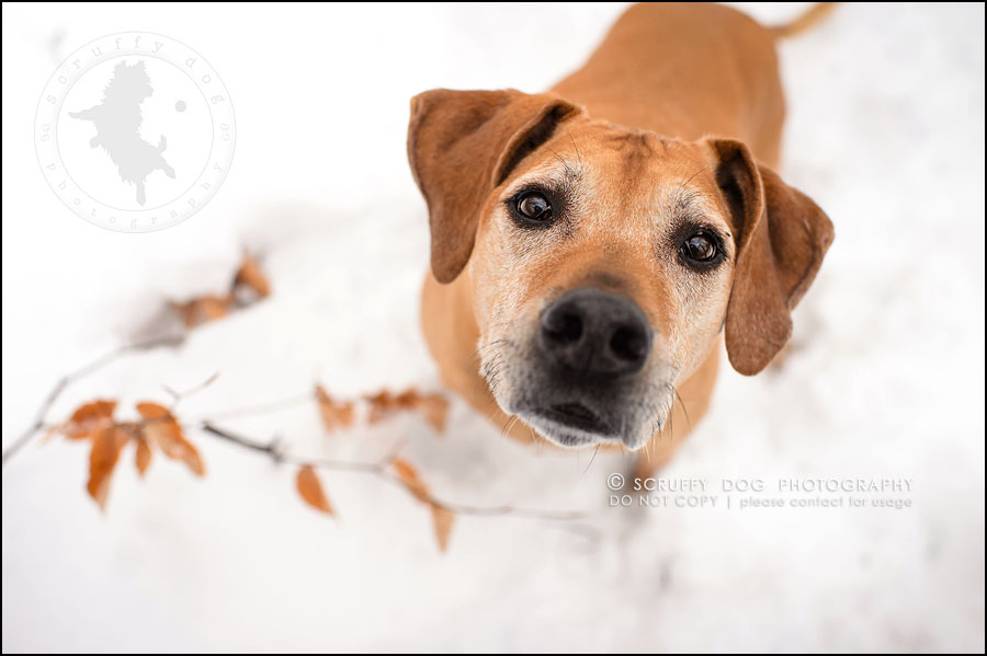 20-waterloo-ontario-professional--dog-photographer-best-makeda slinger-329