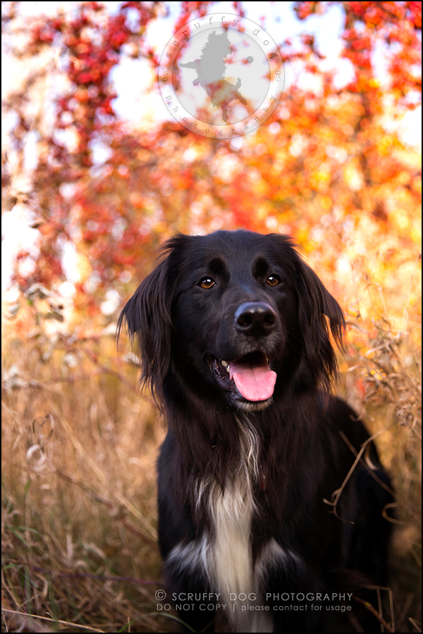 20-waterloo-ontario-professional-dog-photographer-hudson manning-540