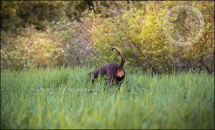 20_guelph_ontario_pet_photographer_best_dog_reese hunsberger-105