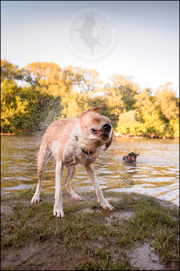 20_hamilton_ontario_pet_photographer_best_dog_remi kona pepper shaw-654