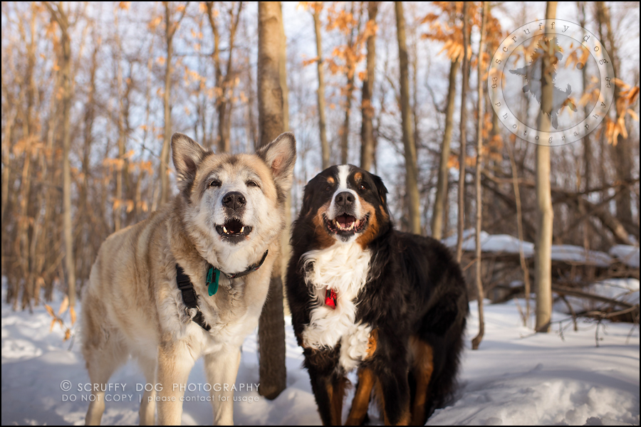 20_toronto_ontario_dog_stock_photography_grace zoe carr-667-Edit