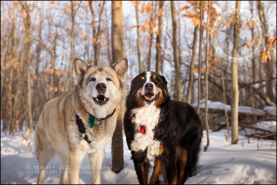 20_toronto_ontario_dog_stock_photography_grace zoe carr-667-Edit
