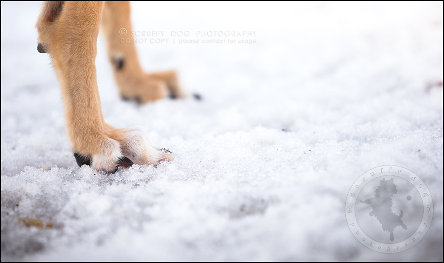 21-toronto-ontario-professional--dog-photographer-lucy poppy real-761