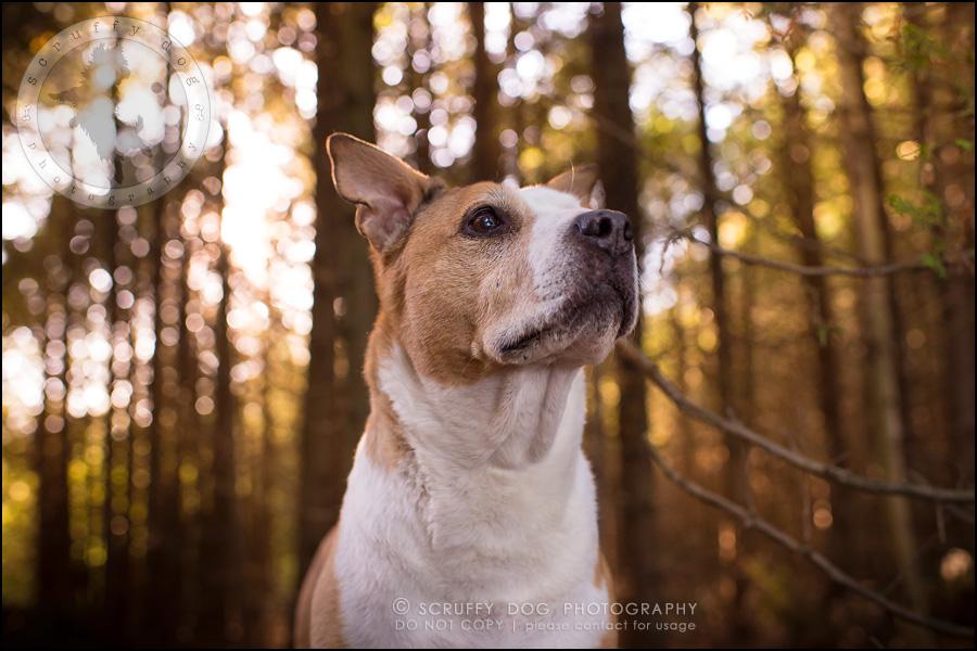 21-toronto-ontario-professional-pet-photographer-jade perry-543