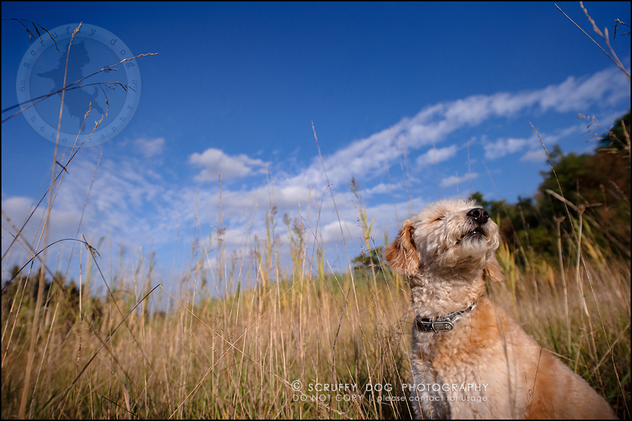21-waterloo-ontario-dog-stock-photography-gulliver george-527