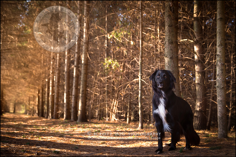 21-waterloo-ontario-professional-dog-photographer-hudson manning-662