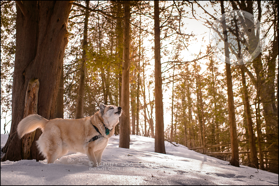 21_toronto_ontario_dog_stock_photography_grace zoe carr-422