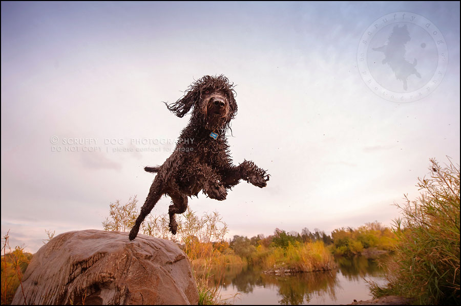 21_waterloo_ontario_best_pet_photographer_murphy odonovan-980
