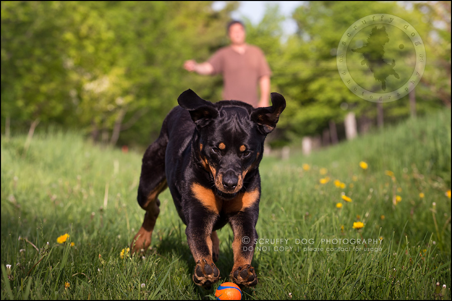 21toronto_ontario_dog_stock_photography_geordi jessie ladrillo-509