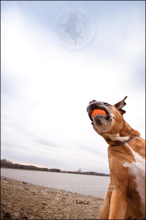 22-brampton-ontario-best-professional-dog-photographer-moose rocket-499