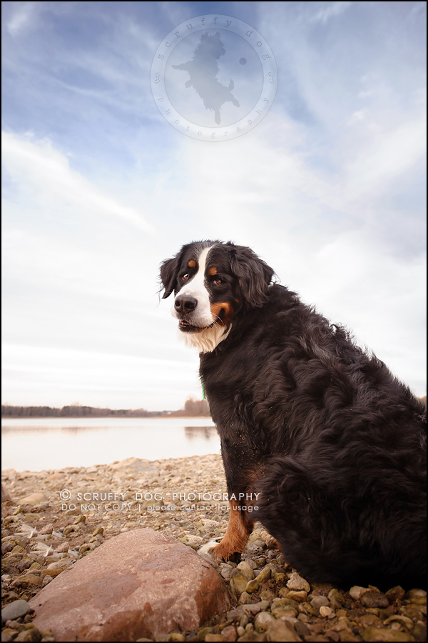 22-toronto-ontario-professional-dog-photographer-henry martha-334