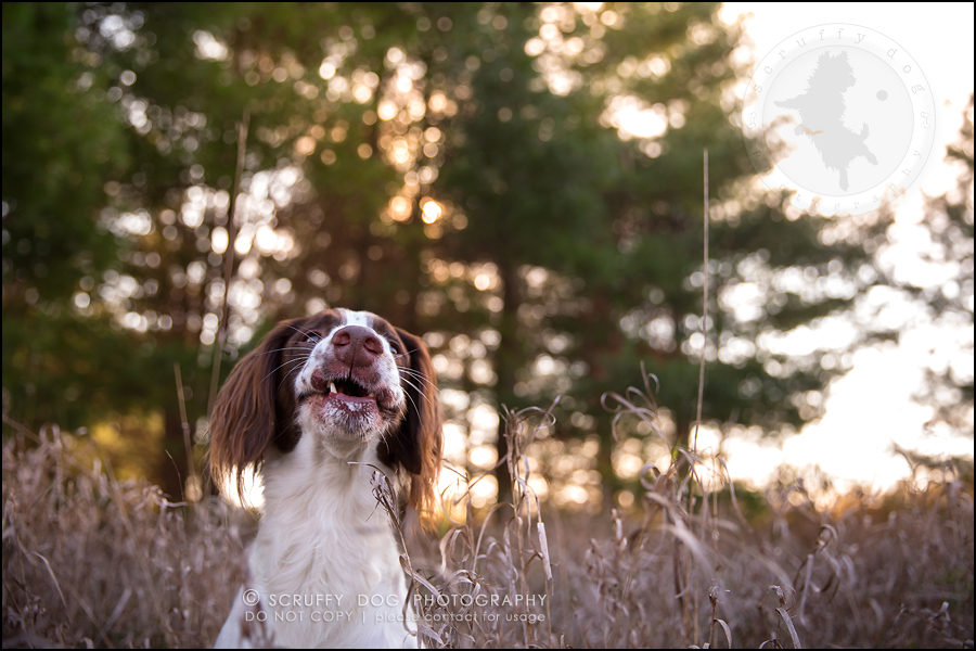22-toronto-ontario-professional-pet-dog-photographer-jake boucher-520