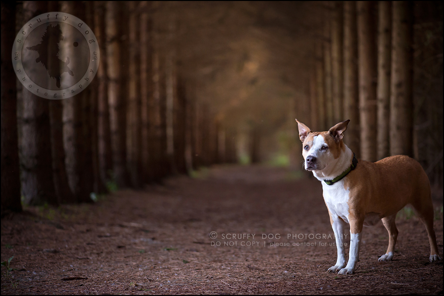 22-toronto-ontario-professional-pet-photographer-jade perry-623