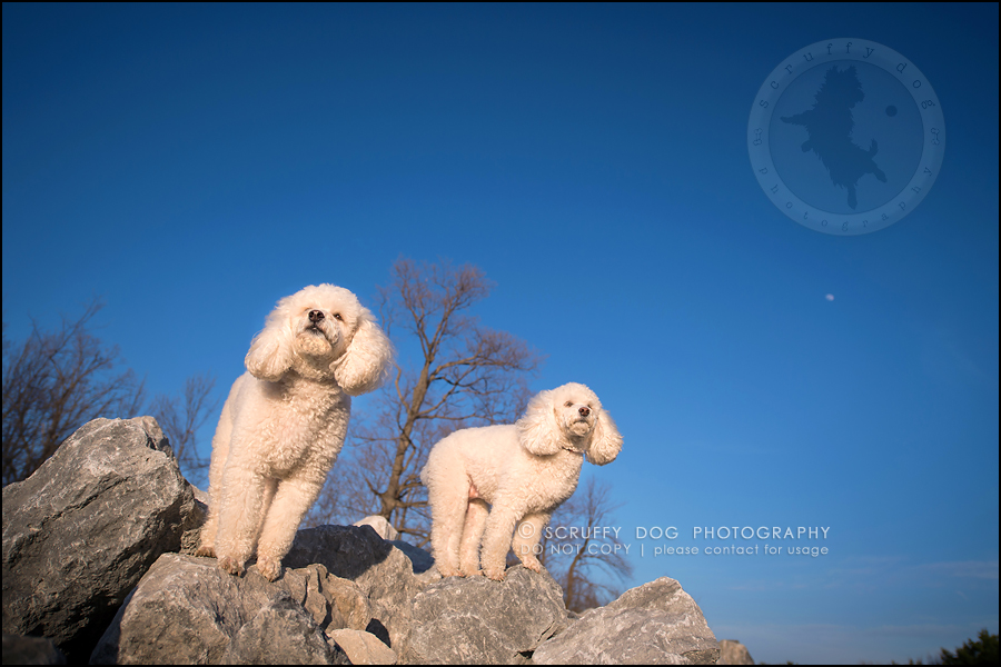 22_ontario_dog_stock_photography_dwss-825