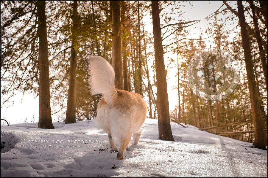 22_toronto_ontario_dog_stock_photography_grace zoe carr-438