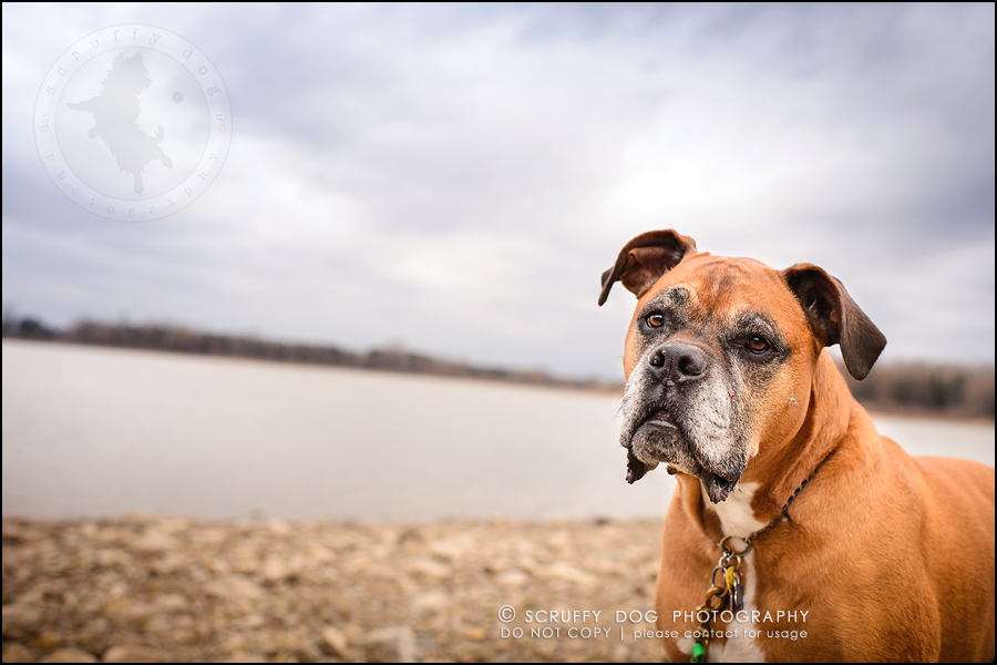 23-brampton-ontario-best-professional-dog-photographer-moose rocket-929