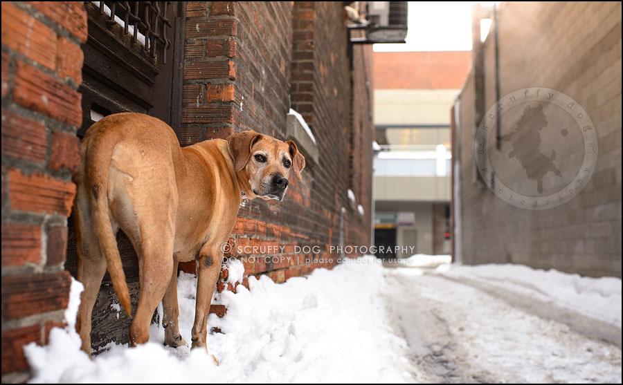 23-waterloo-ontario-professional--dog-photographer-best-makeda slinger-388