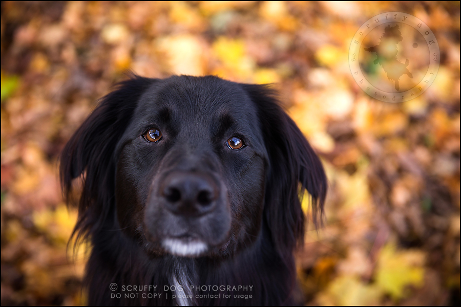 23-waterloo-ontario-professional-dog-photographer-hudson manning-588