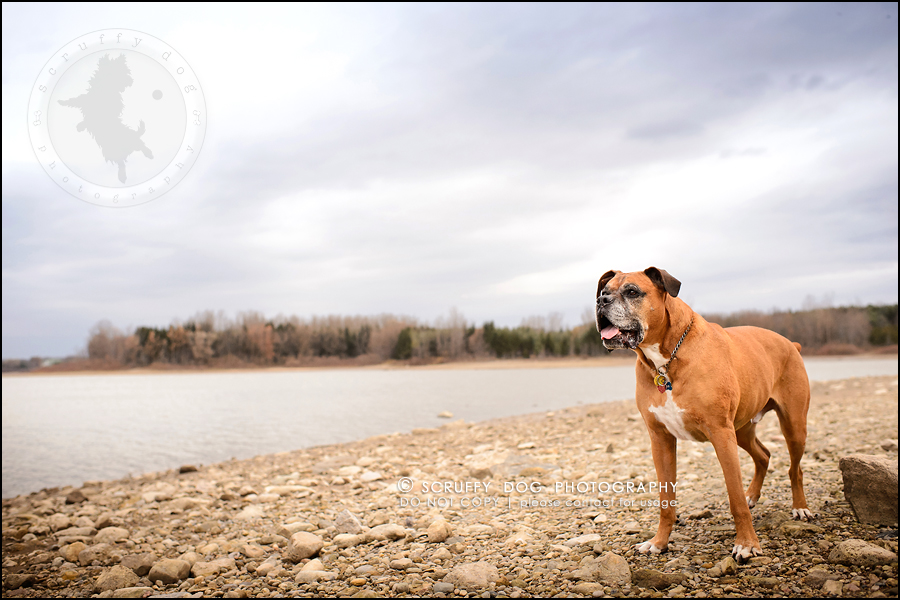 24-brampton-ontario-best-professional-dog-photographer-moose rocket-907