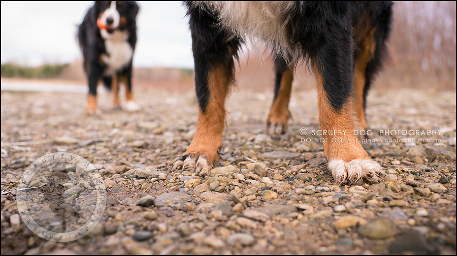 24-toronto-ontario-professional-dog-photographer-henry martha-611