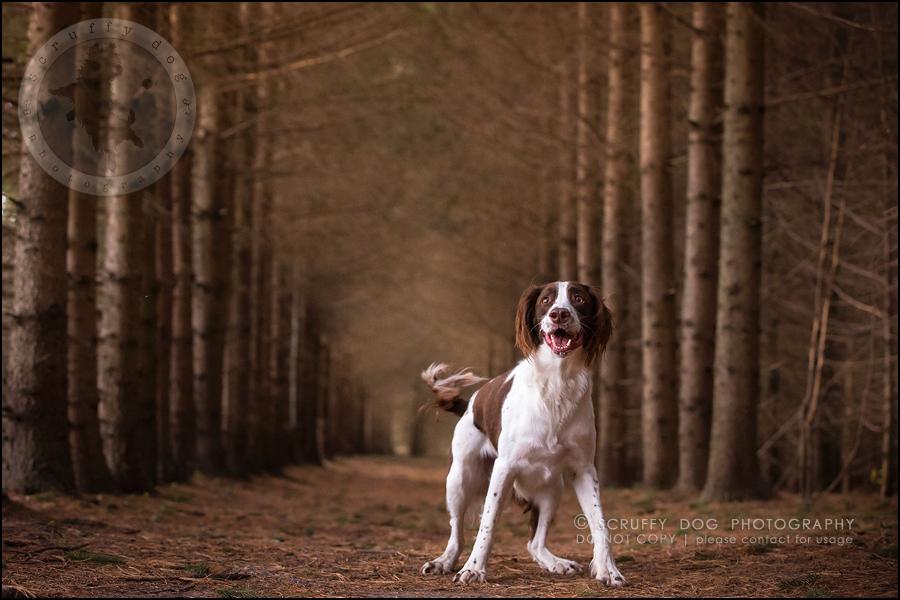24-toronto-ontario-professional-pet-dog-photographer-jake boucher-775