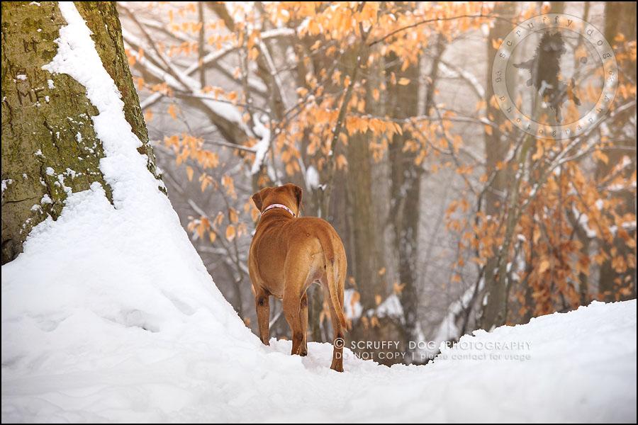 24-waterloo-ontario-professional--dog-photographer-best-makeda slinger-142
