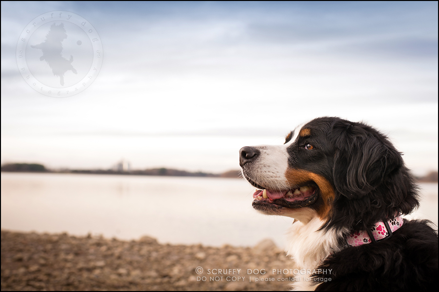 25-toronto-ontario-professional-dog-photographer-henry martha-578