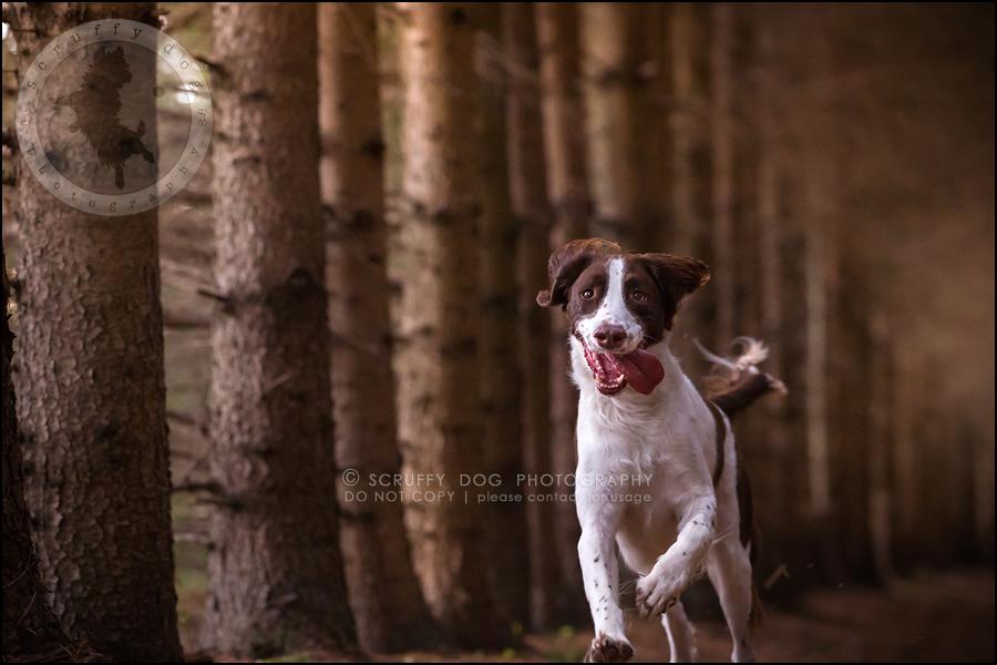25-toronto-ontario-professional-pet-dog-photographer-jake boucher-803