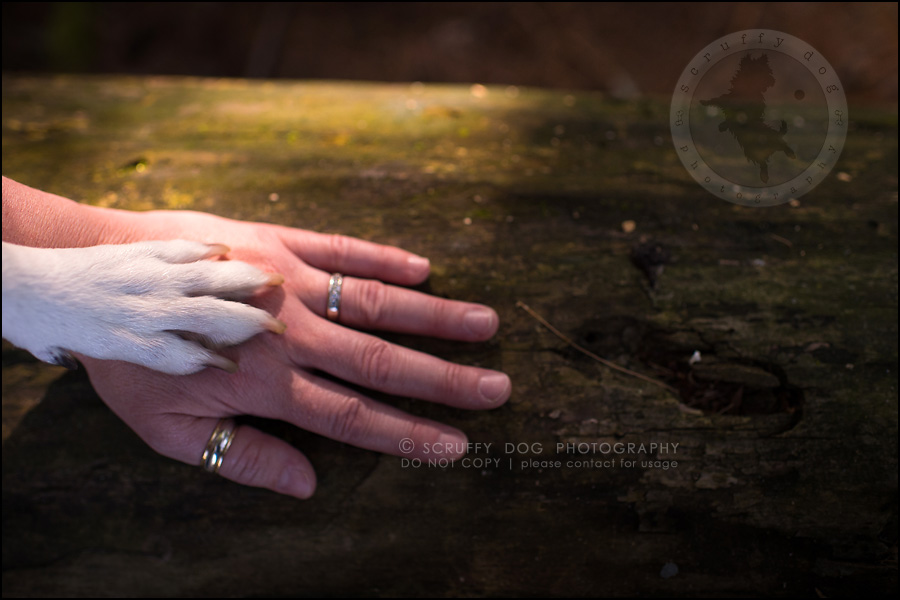 25-toronto-ontario-professional-pet-photographer-jade perry-222