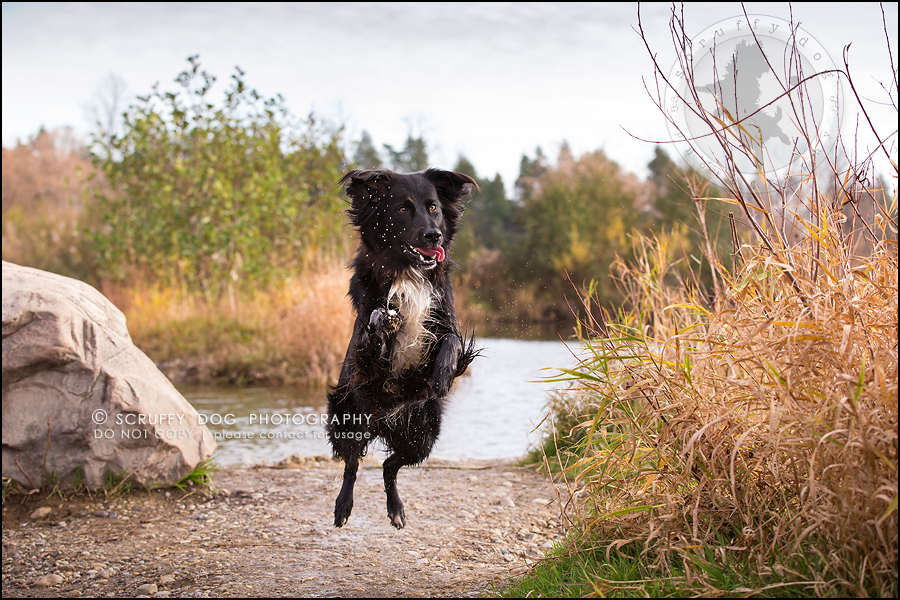 25-waterloo-ontario-professional-dog-photographer-hudson manning-923