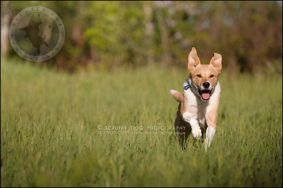 25_hamilton_ontario_pet_photographer_best_dog_remi kona pepper shaw-777