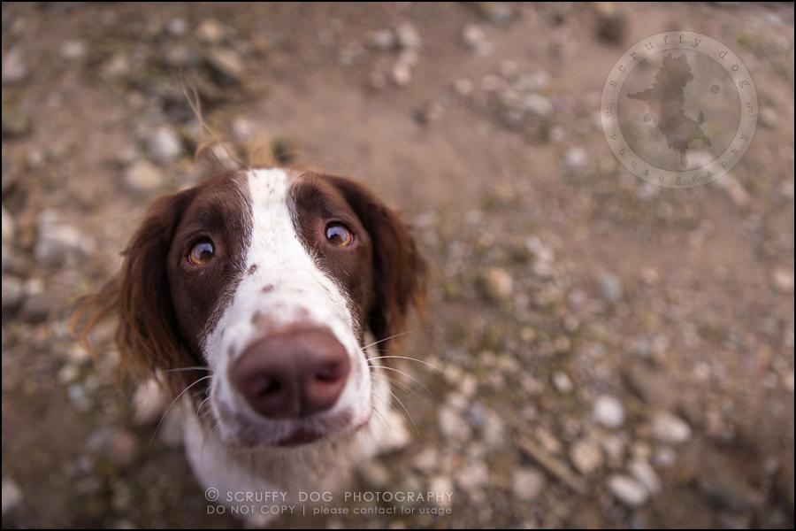 26-toronto-ontario-professional-pet-dog-photographer-jake boucher-1251