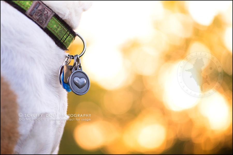 26-toronto-ontario-professional-pet-photographer-jade perry-694