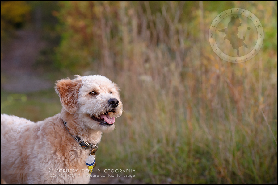 26-waterloo-ontario-dog-stock-photography-gulliver george-636
