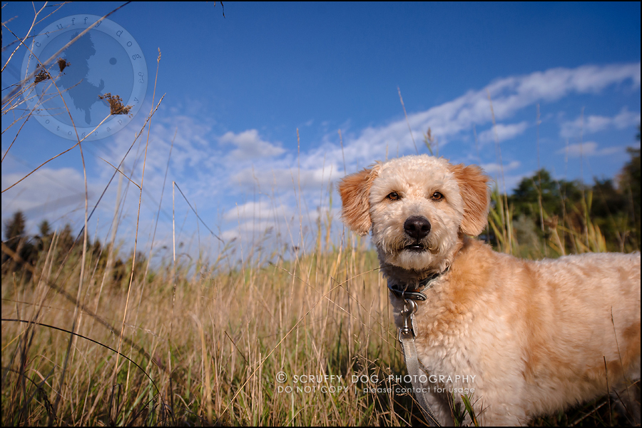 27-waterloo-ontario-dog-stock-photography-gulliver george-534