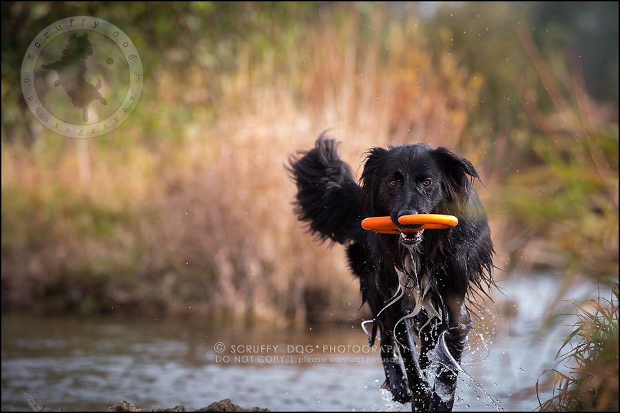 27-waterloo-ontario-professional-dog-photographer-hudson manning-950