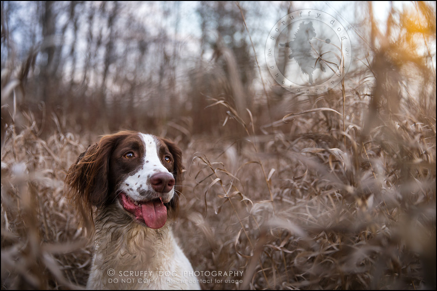 28-toronto-ontario-professional-pet-dog-photographer-jake boucher-1300