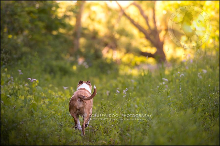 28-toronto-ontario-professional-pet-photographer-jade perry-320