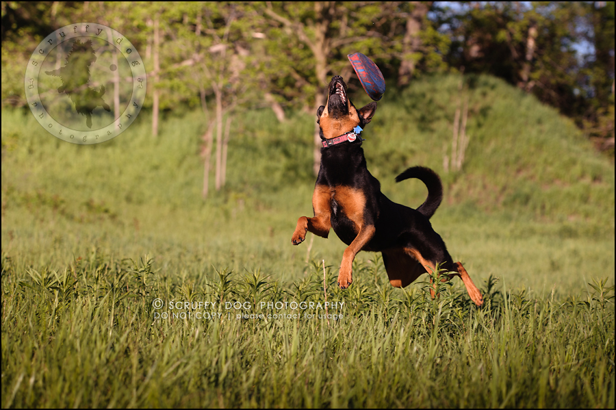 28_hamilton_ontario_pet_photographer_best_dog_remi kona pepper shaw-919